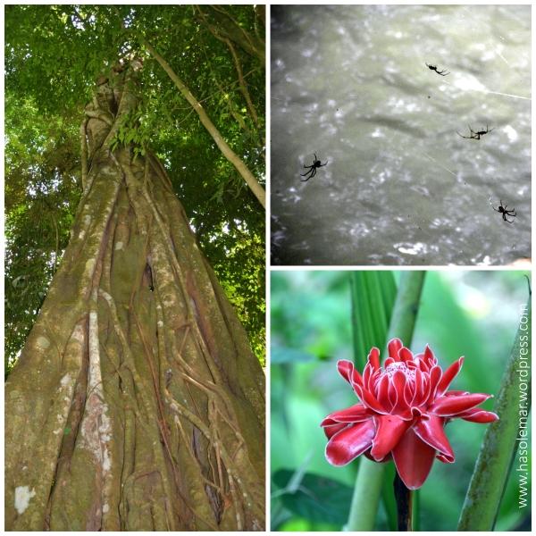 A floresta na Cascata Kuang Si