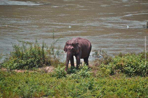 O elefante no rio