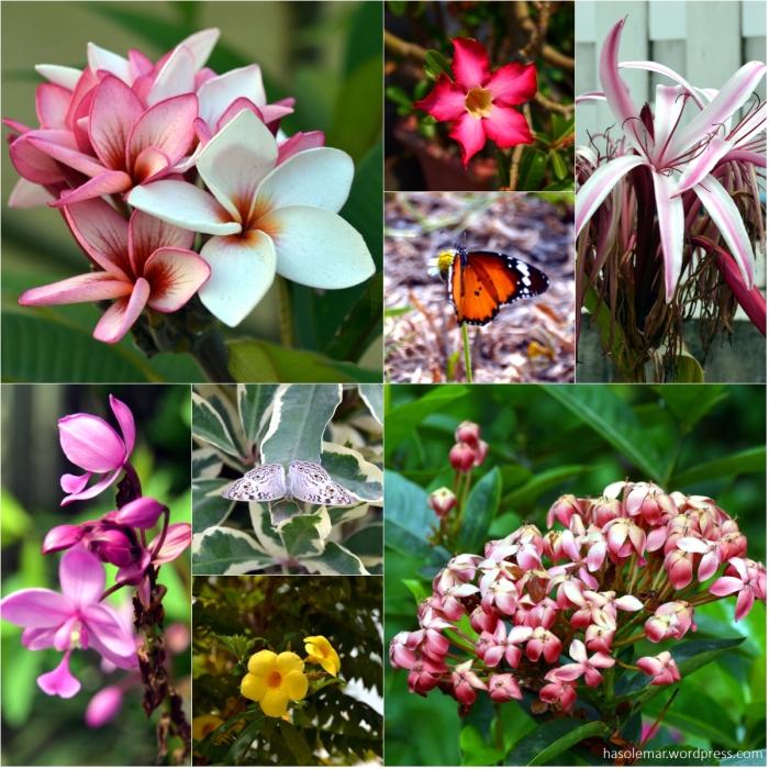 Flores do Laos