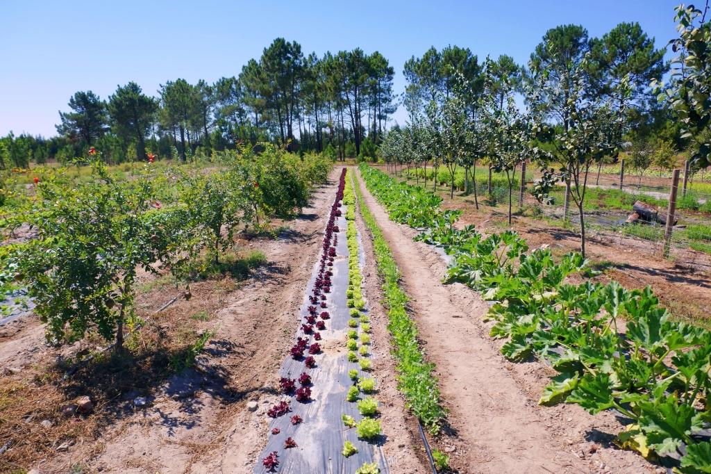 Horta do Craveiral FarmTable, Odemira, Portugal